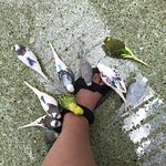 A favorite way to spend a little time, feeding the birds. They love shoes and feet