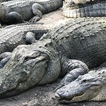 Aside from shows ask the staff all about gators. Learn about these amazing creatures!