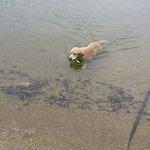 Pet friendly waters