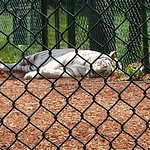 Photo de York's Wild Kingdom Zoo and Fun Park