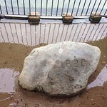 Plymouth Rock Foto