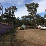 Bush Camp 3