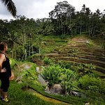 Overlooking rice fields