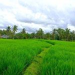 Bali's beautiful scenery