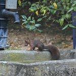 De belles couleurs d'automne, le spectacle au  petit déjeuner de la famille écureuil.