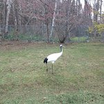 Japanese Crane Reserve Foto