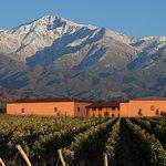 Bodega Cuvelier Los Andes