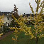 Beautiful ginko trees and Japanese maples on the property