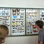 learning about the different types of butterflies