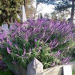 Foto de Old City Cemetery