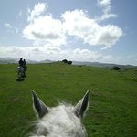 Catlins Horse Riding