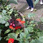 mariposas :)