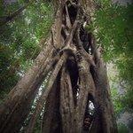 Chicago SDA Academy climbing at Green Paradise Ecological Preserve.