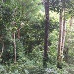 Por la selva!!!
