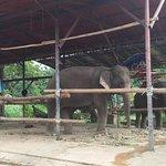 Recinto elefantes!!!