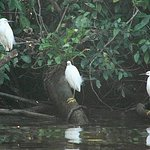 Photo of Tortuguero Canal