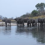 Elephants from the sunset cruise