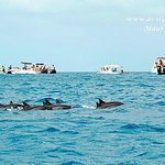 Dolphin Attractions with As-Siyaaha Tour Operator in our paradise island, Mauritius