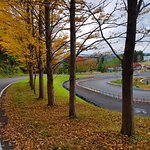 Autumn leaves in Romantopia