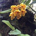Une des orchidées
