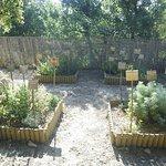 Jardins de Saint-Benoit Foto