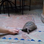 Tortoise at the pool!