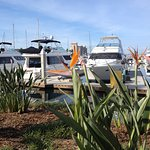 Marina boardwalk photo of boats and Bird of paradise. Nice, safe, walk.
