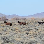 wild horses with foal