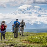Walking on the alpine tundra in Denali National Park