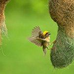 Kalametiya Bird Sanctuary Bird Watching