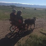 Riding chariot pulled by mini- horse. Kids love it too!