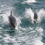 Dolphins entertaining us by our tour boat.