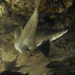 Aliwal Dive Centre Photo