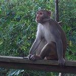 wild monkey in silver springs park