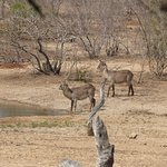 Visitors to the waterhole
