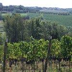 La vigne de Daniele