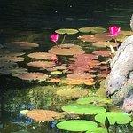 Pond in Japanese garden