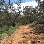 The trail up Mt Ainslie