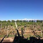 View from Vineyard Villa