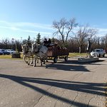 Horse drawn hay ride after bruch ....free