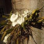 Orquídea en hotel Marazul