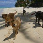 Beach dogs in Rarotonga