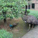 Bird park (ostrich)