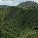 ND Kiwi Tours