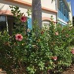 Alamanda Resort Foto