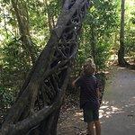 Foto di Daintree National Park