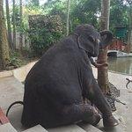 Namuang Safari Park Foto