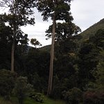 Dantica Cloud Forest Lodge Foto