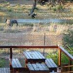 Oct 21 Elephants