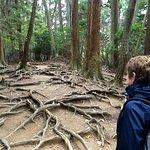 Mount Kurama hike